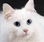 Leyendas de gatos